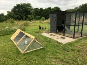 hønsegård kyllinger kyllingegård