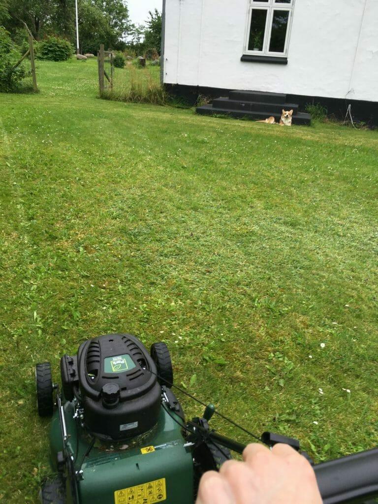 Hund græsslåmaskine græsklipning