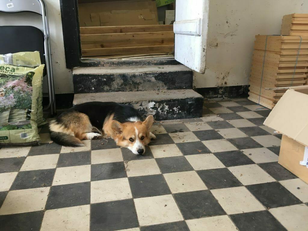 hund gulv værksted