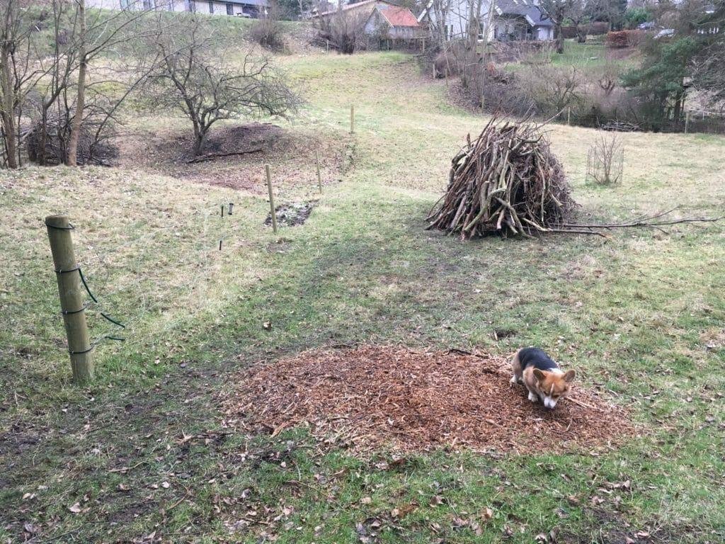 bål mark brænde hund
