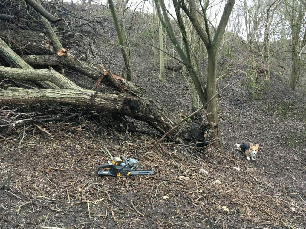 træfældning hund motorsav
