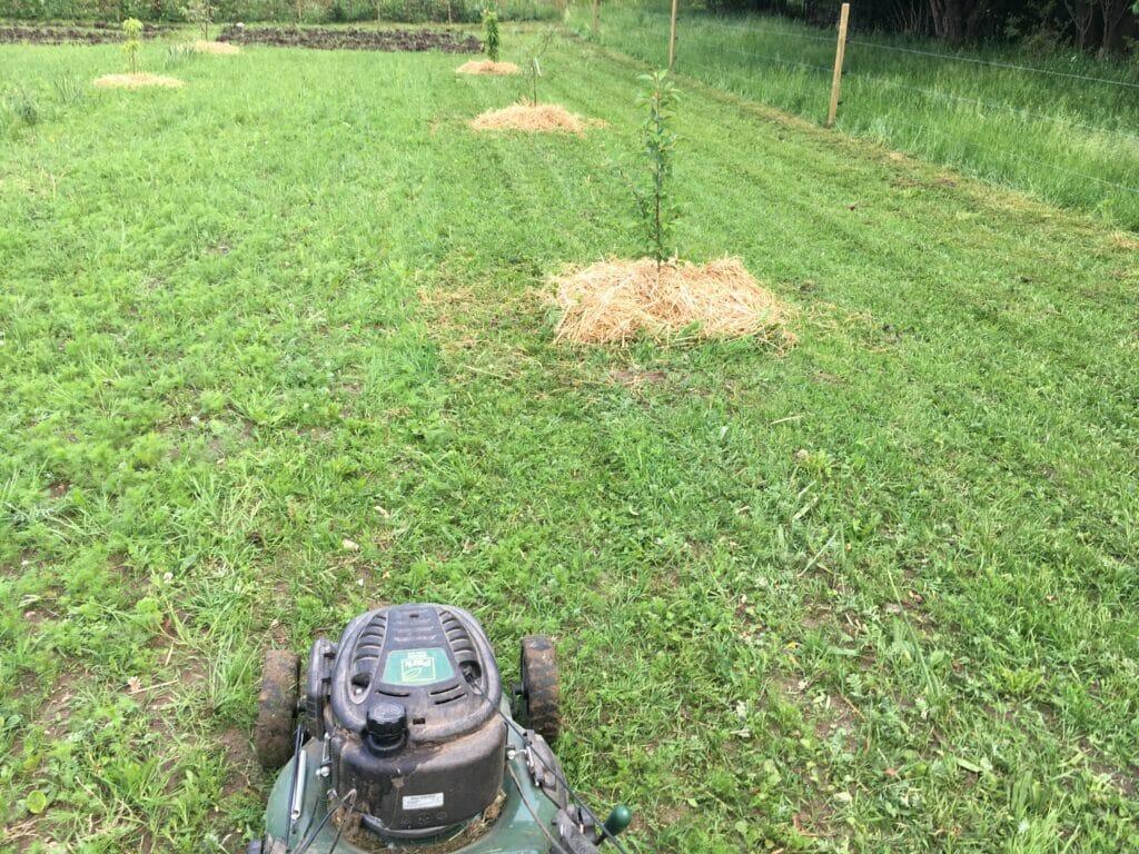 græsklipning plæneklipper græs
