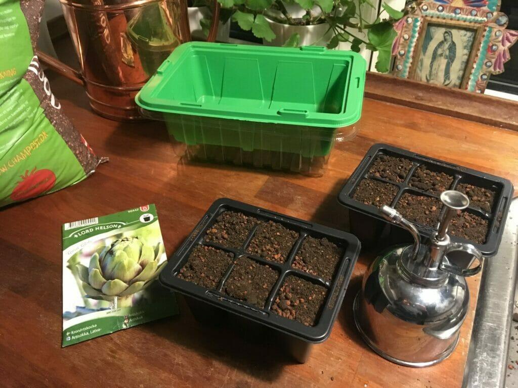 forspiring artiskok plantebord vandkande
