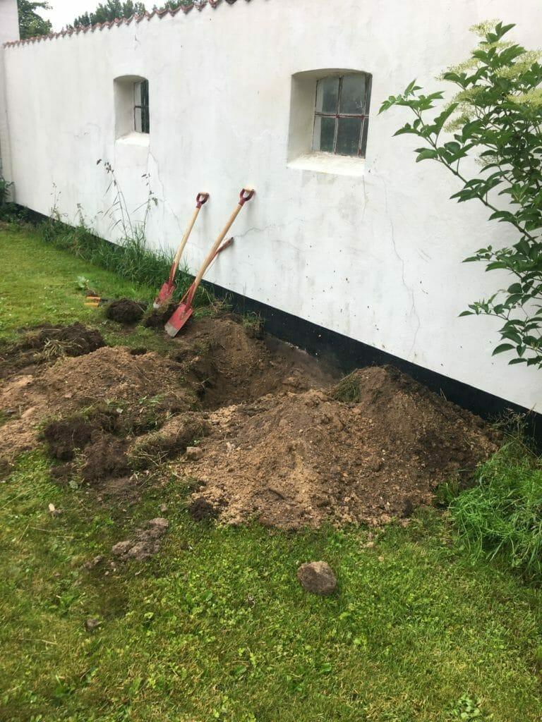 opgravning plantnig af figen i danmark
