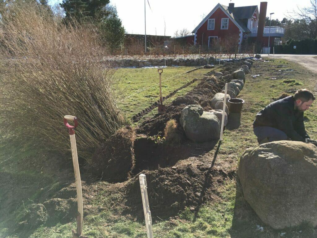 Vinter busk opgravning