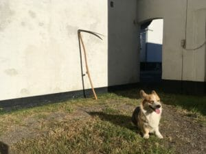 le hund gårdsplads