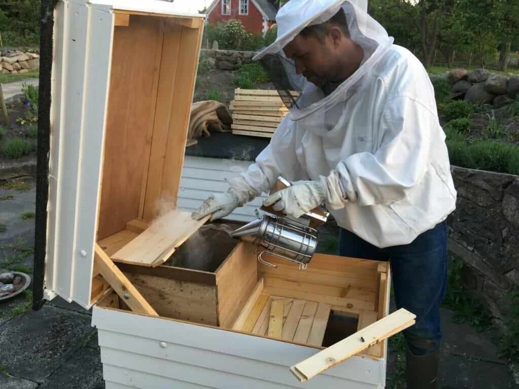 honningproduktion bier honning