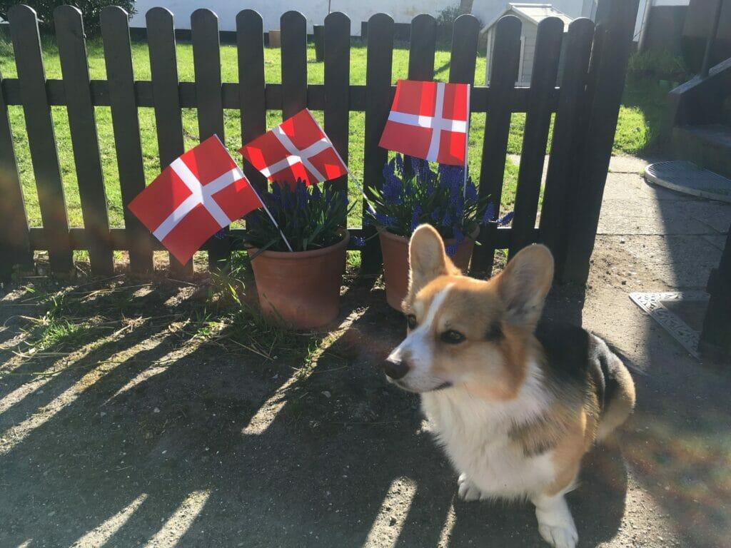Fødselsdag hund flag