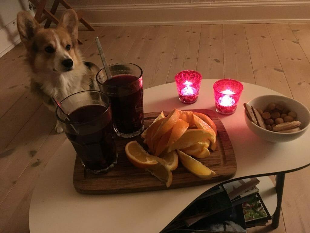 Gløgg appelsin hund sofa