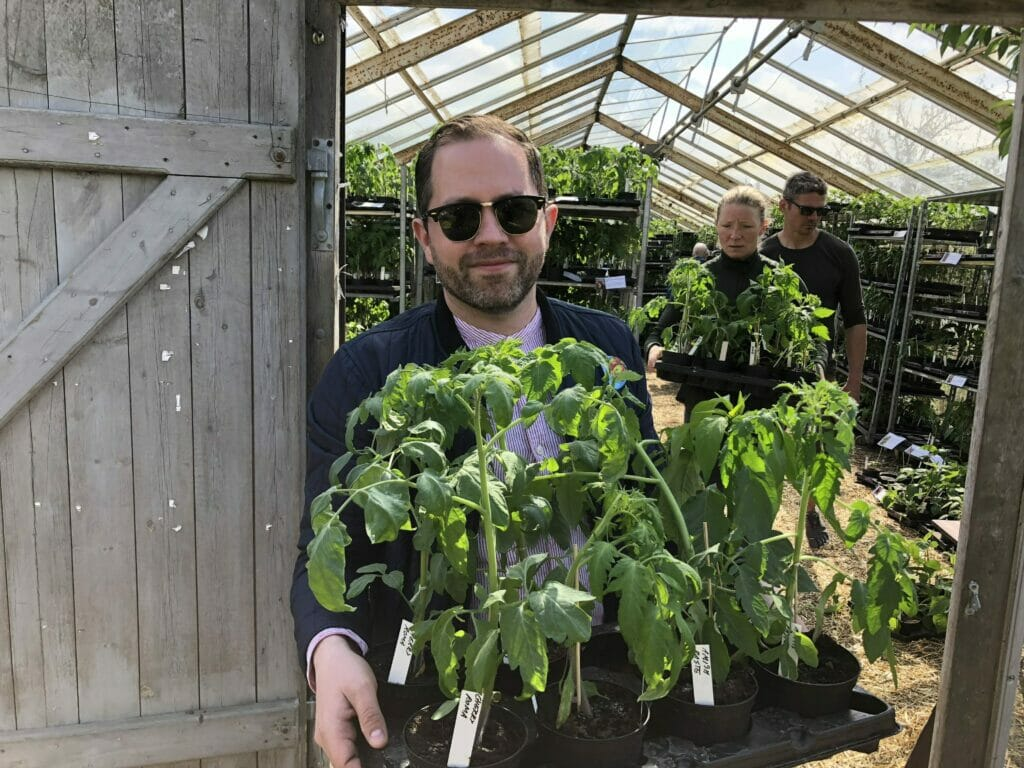 Tomatplanter planting
