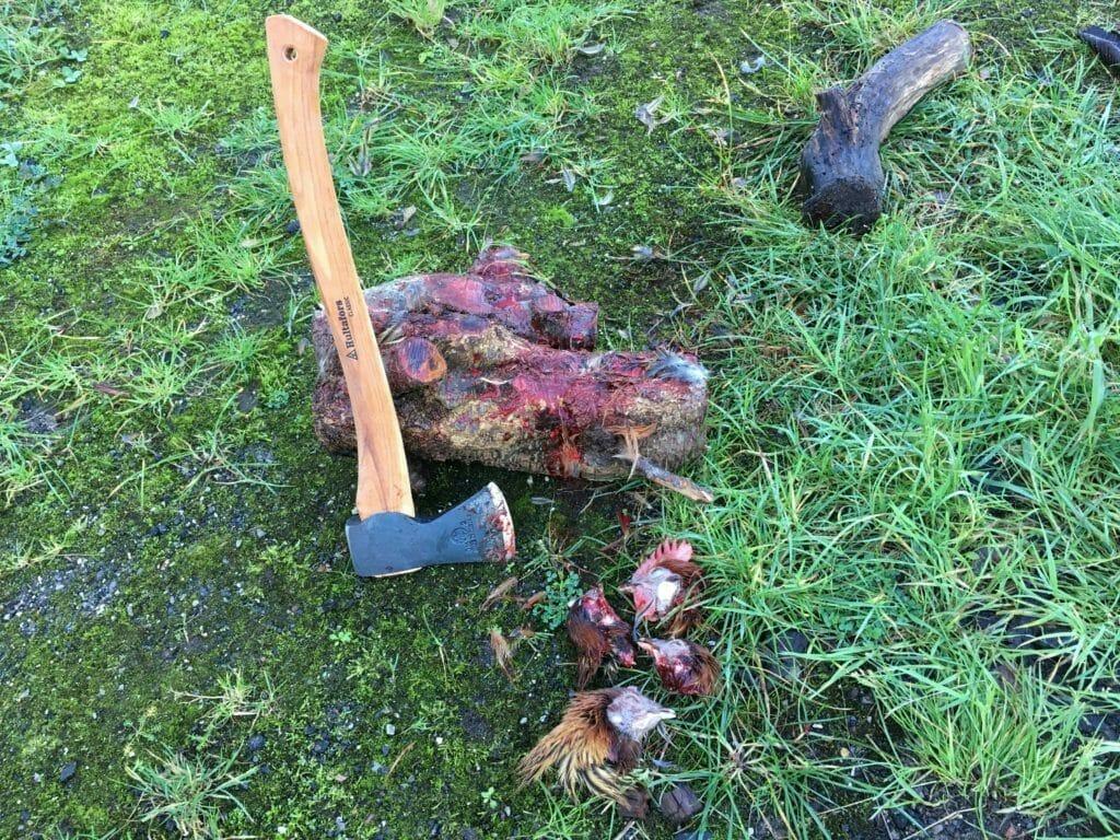 slagtning høns økse blod