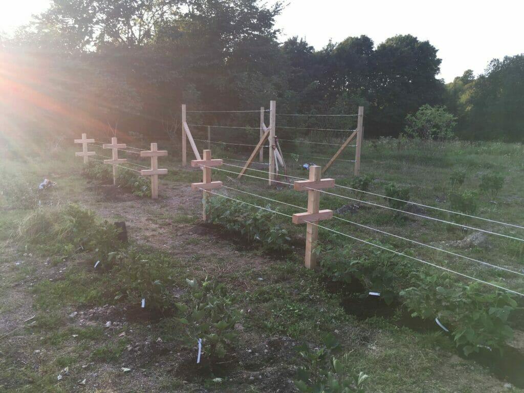 bærhave plantetid