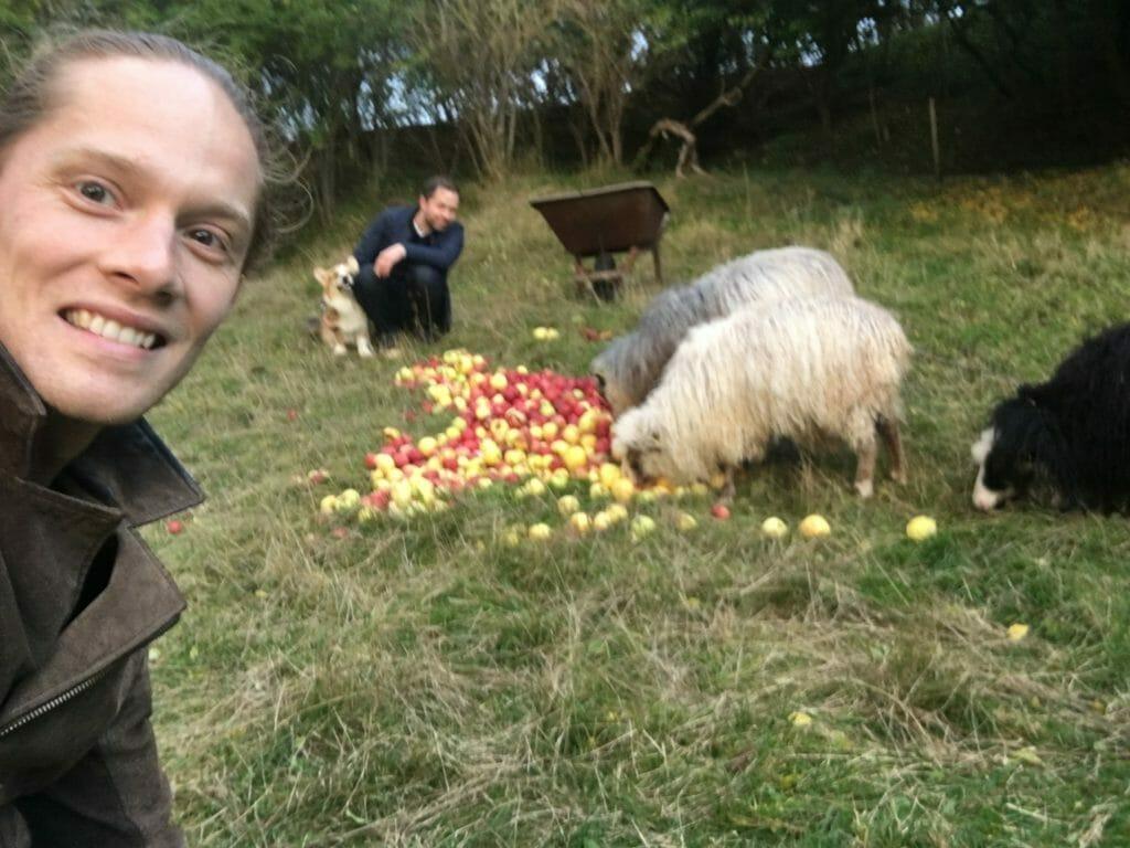 Selfie får æbler med orm hund