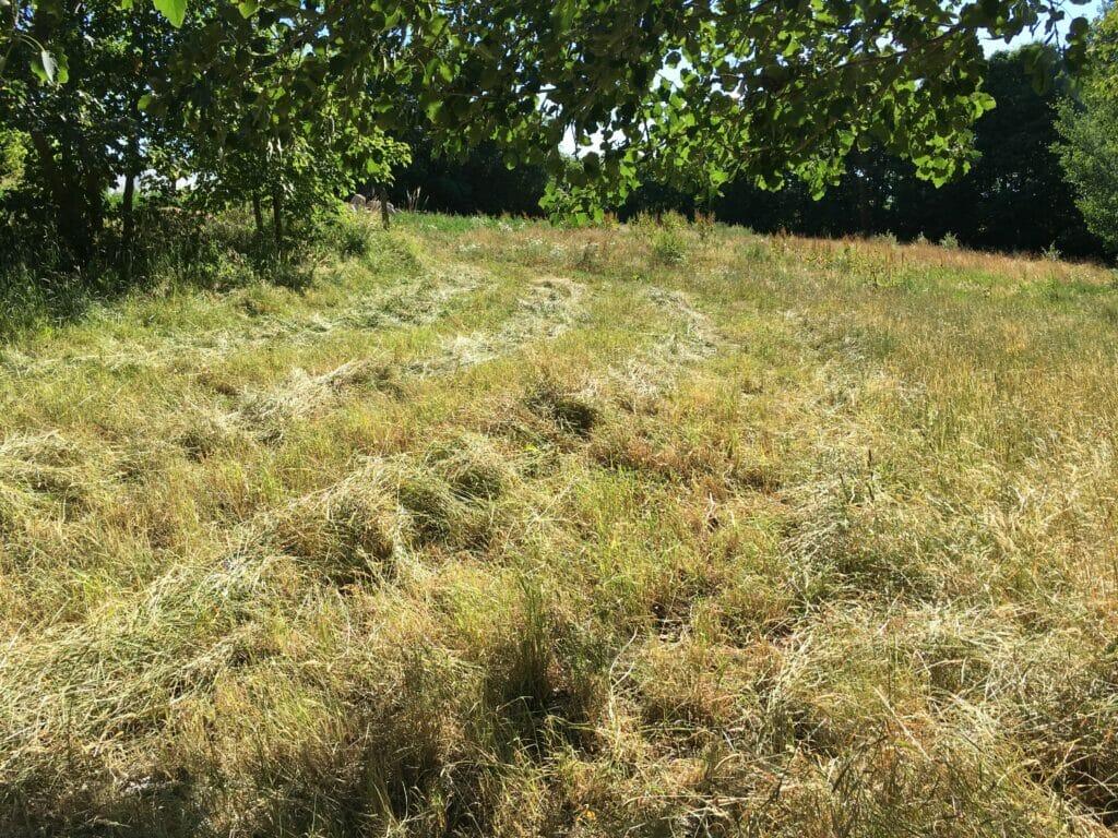 hjemmelavet hø slået græs