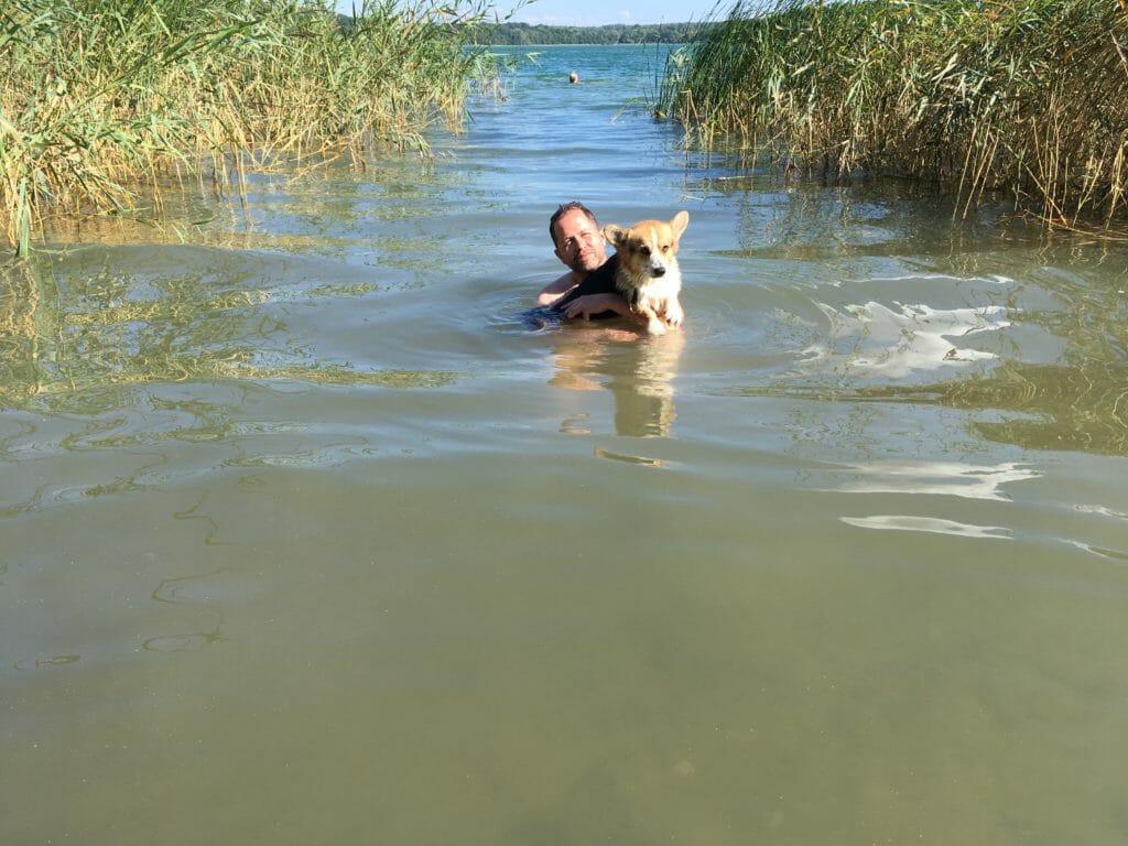Hund svømmer