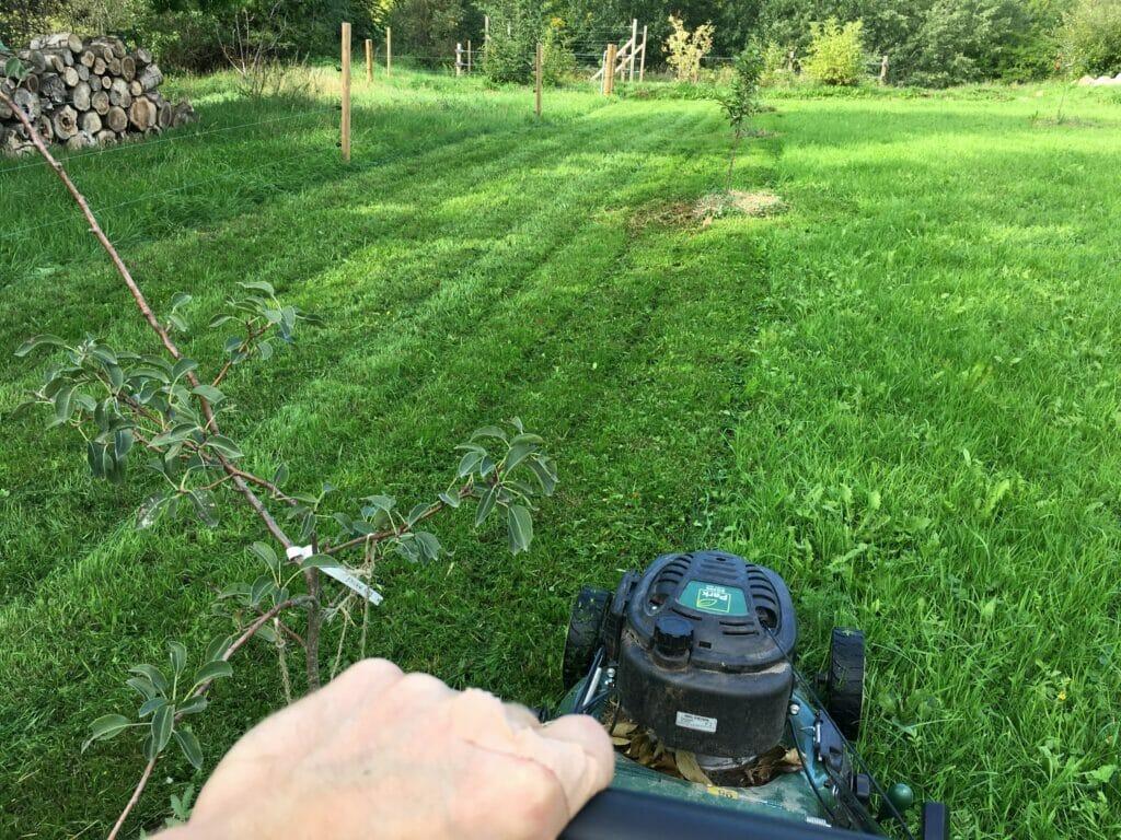 græsklipning plæneklipper græs så