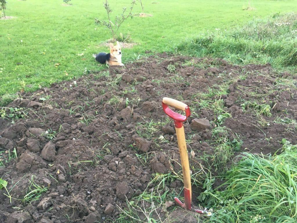 gravning no-dig køkkenhave
