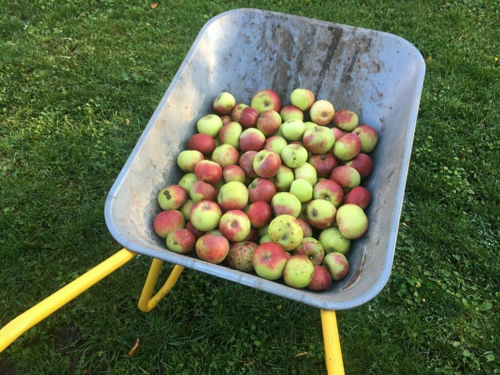 trillebør æbler