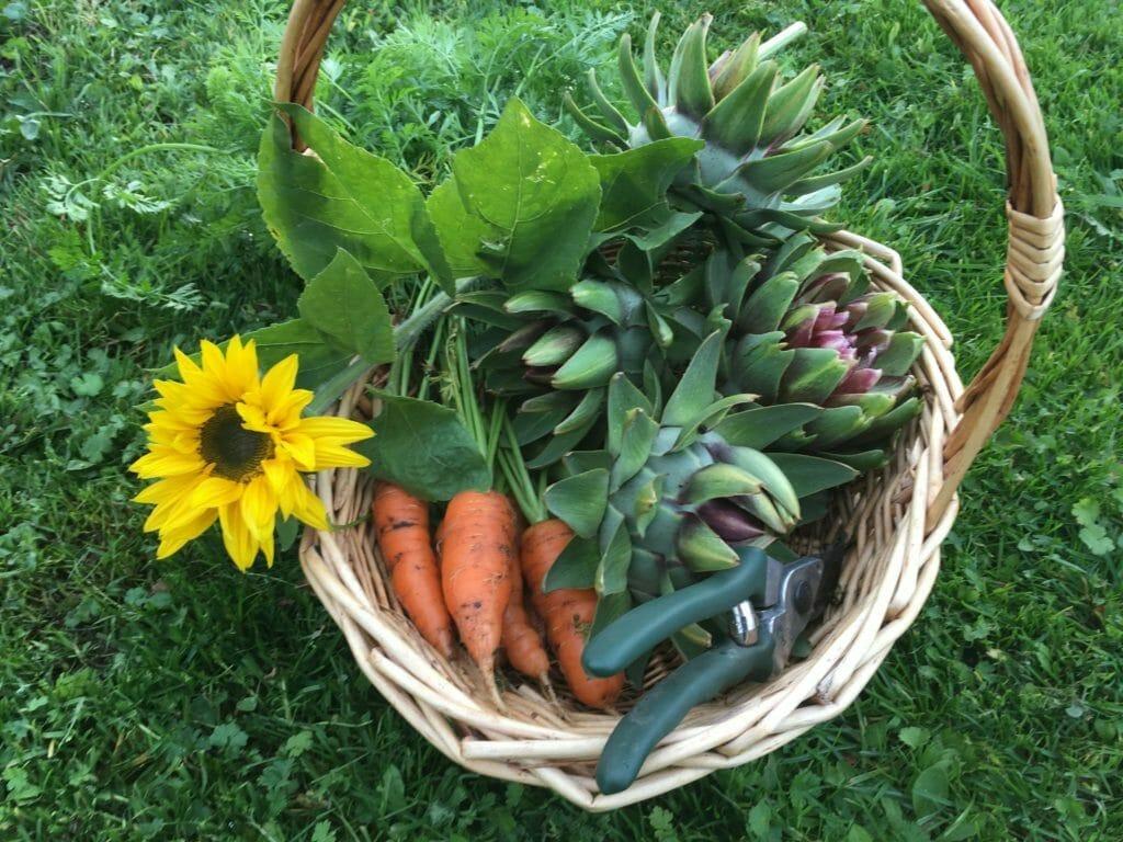 grøntsager artiskok kurv