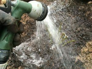 vand vanding roser barrodsroser