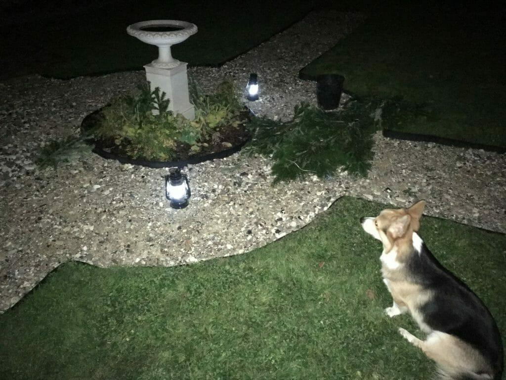 lys i haven opsætning gran