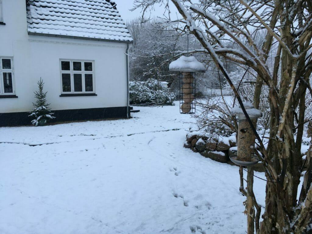 fugle fuglekugler fuglefoder snevejr hvid jul