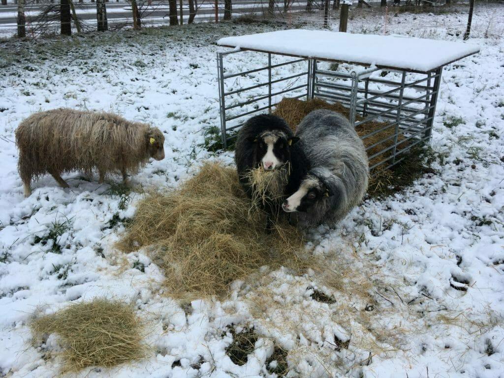 får snevejr hvid jul