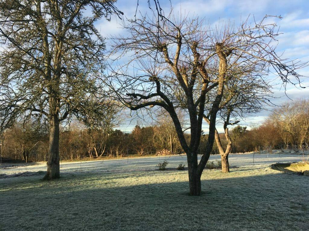 frostvejr frugttræer have