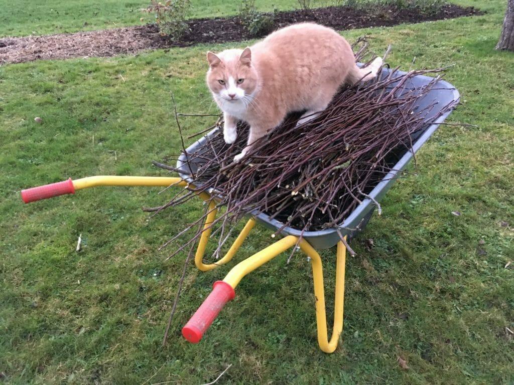 kat trillebør æblegrene grene