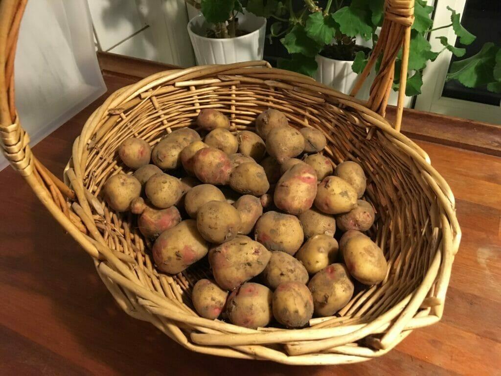 Kartoffelmos kartofler King Edward