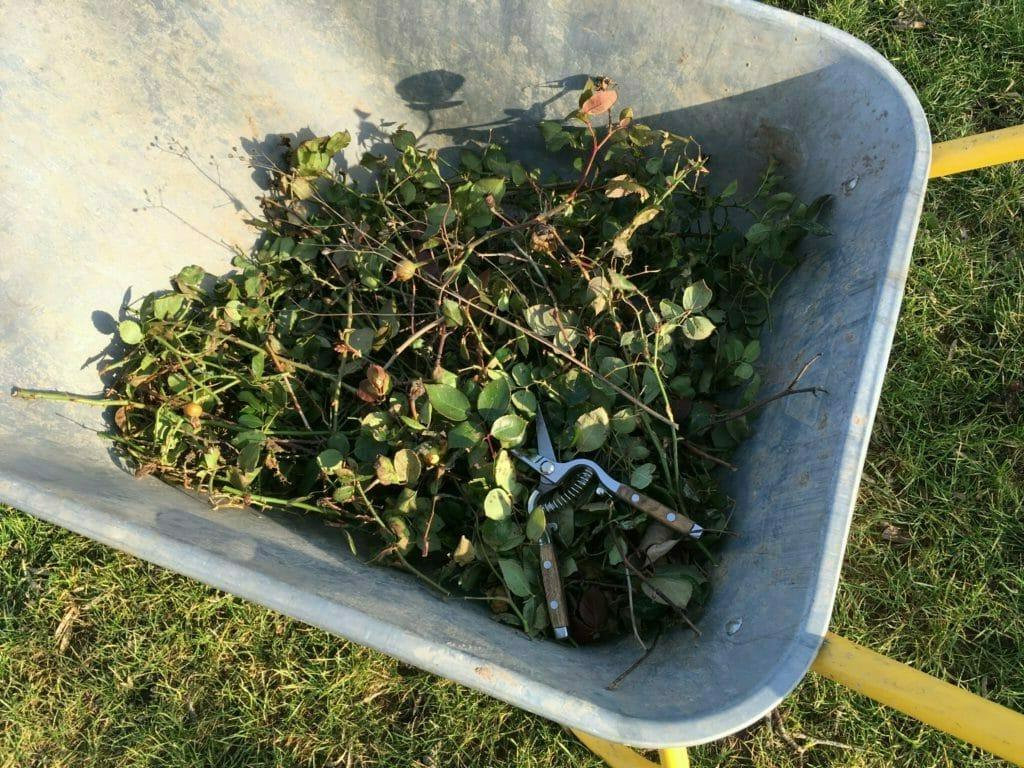 roser afklip trillebør affald