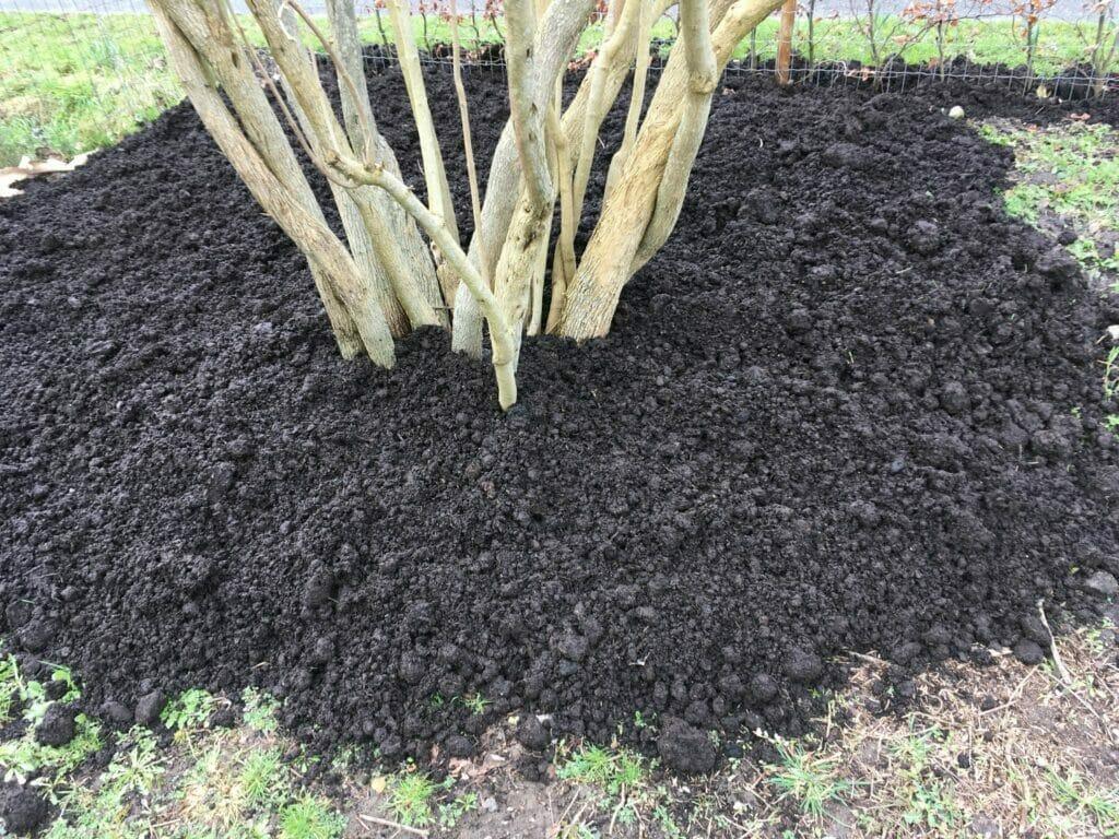 skvalderkål champignonmuld champignon muld bekæmpelse