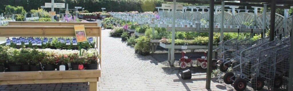 farve inddelt stauder planteskole bedste hesselbækgård