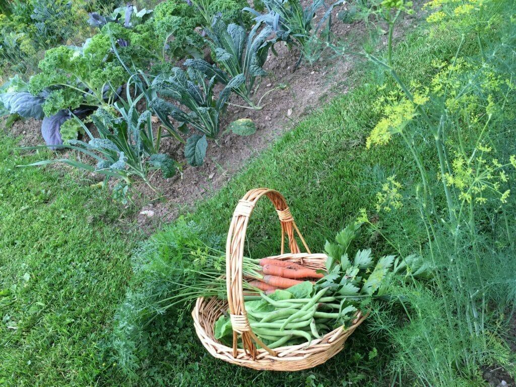 salat kurv køkkenhave grøntsager