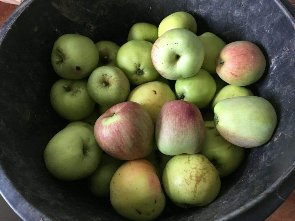 æbler hjemmelavet æblekage