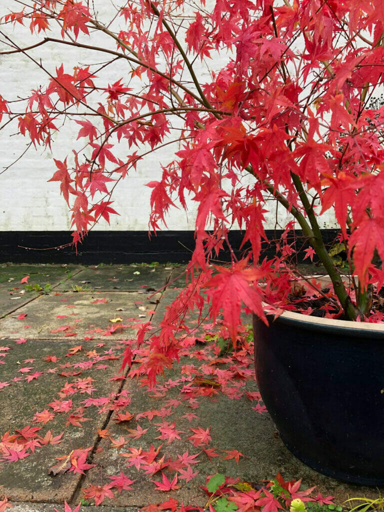 Efterår i haven