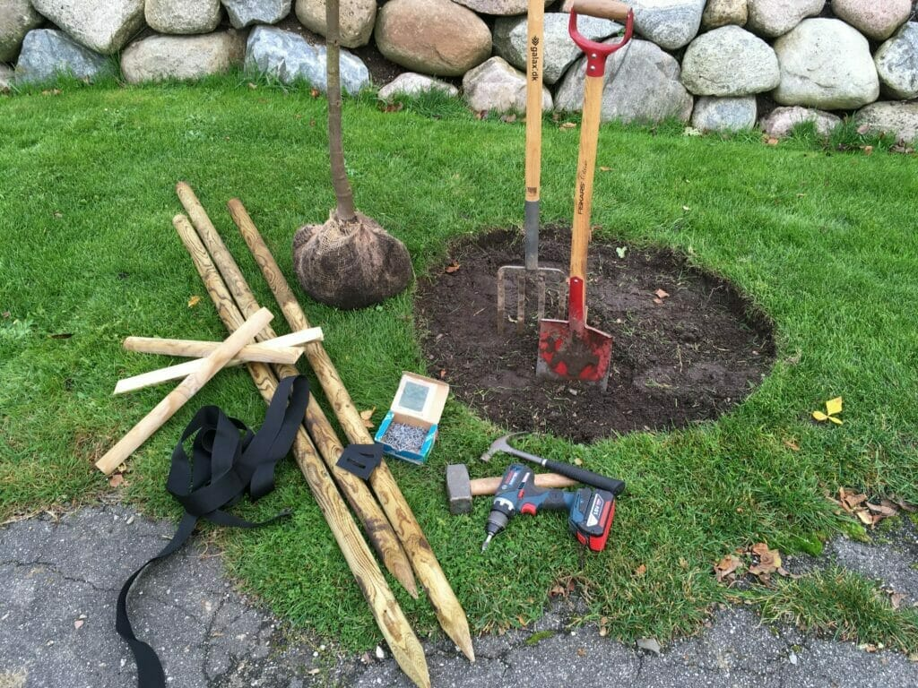 opbinding af træer
