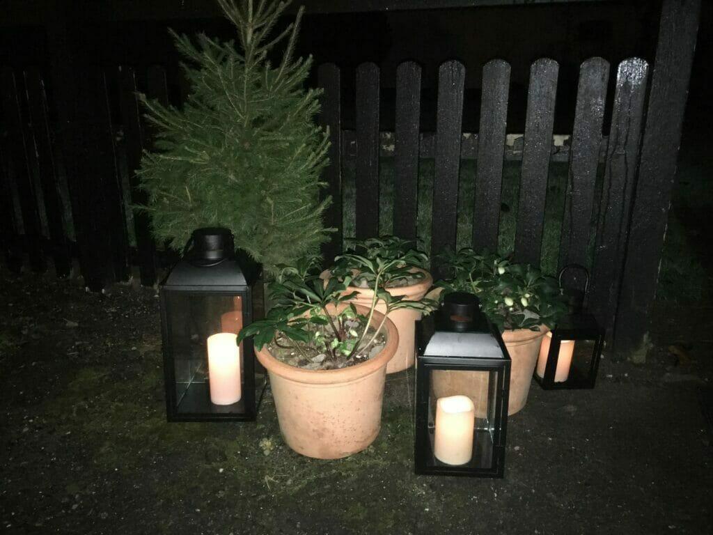 Juletræ lys lanterner juleroser