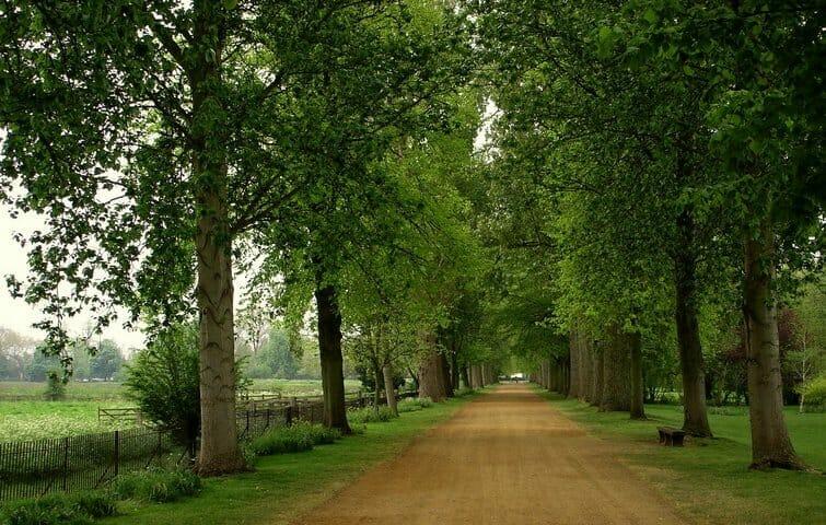 alletræer