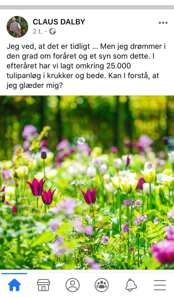 Claus Dalby første forårsblomster