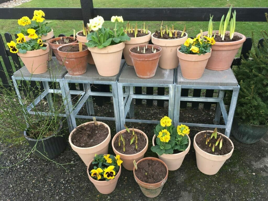 plantebord krukkehave