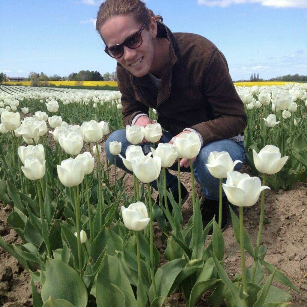tulipan mark avl dyrkning af tulipanløg