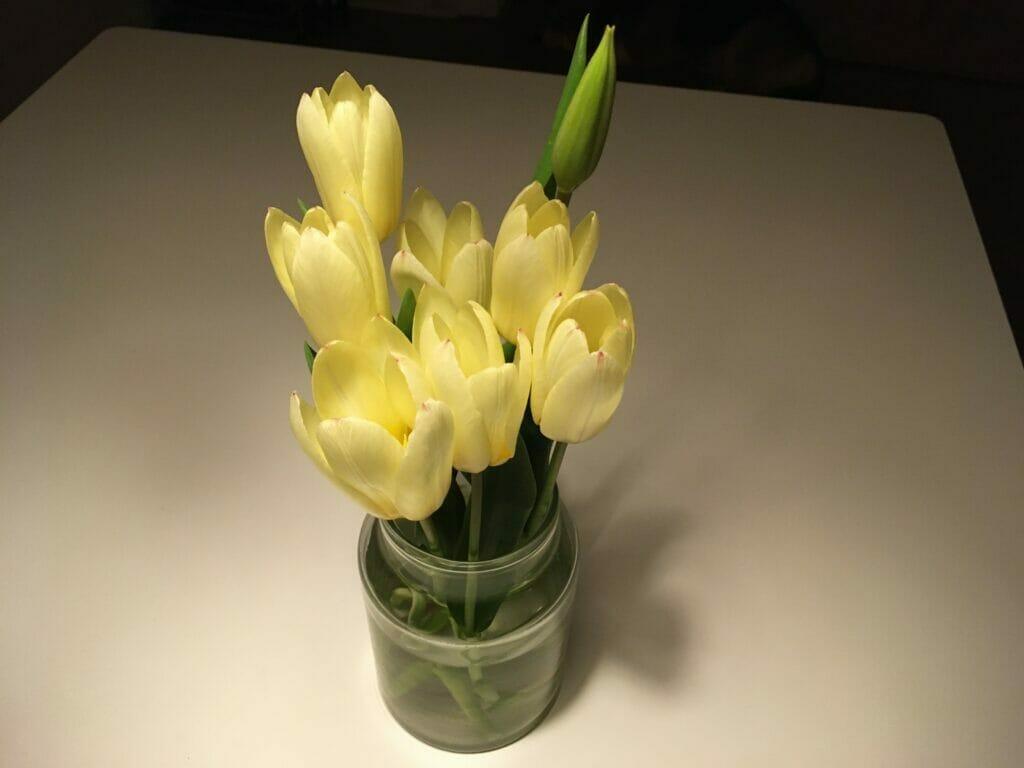 tulipan buket tulipanløg