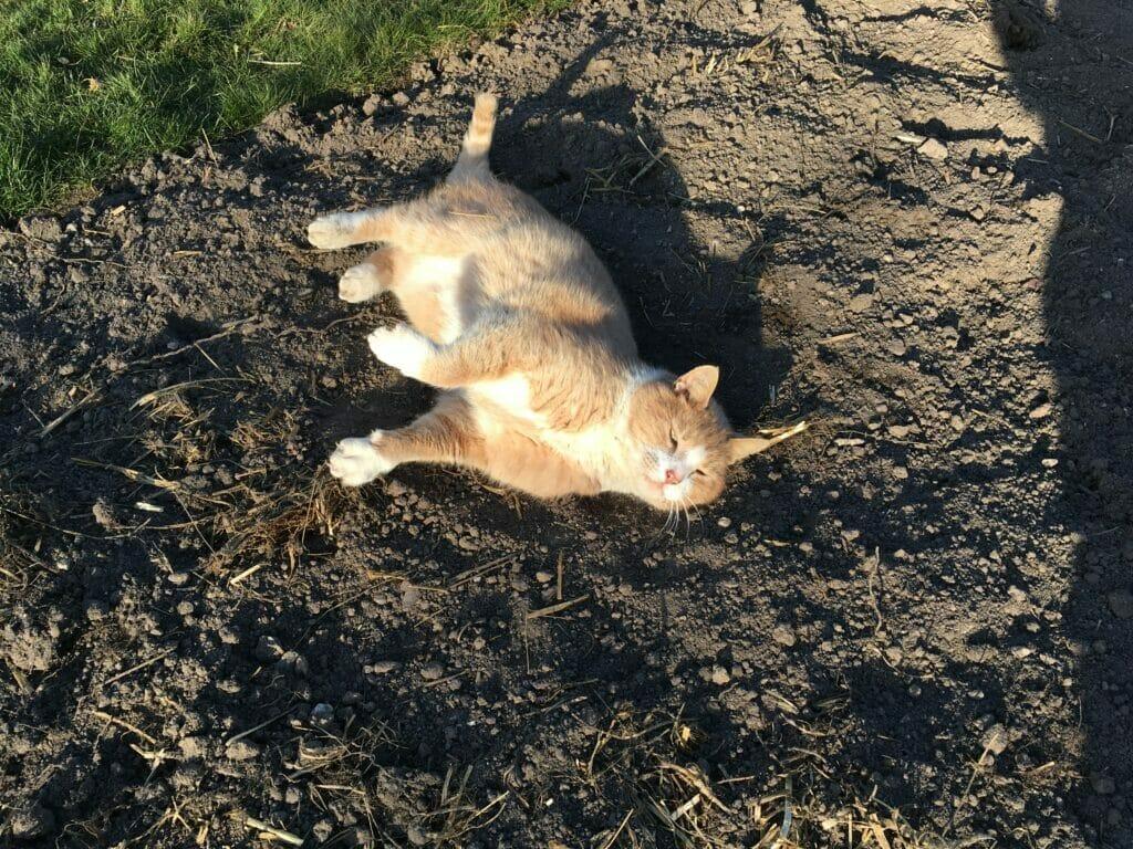 Kat solbader sandbader