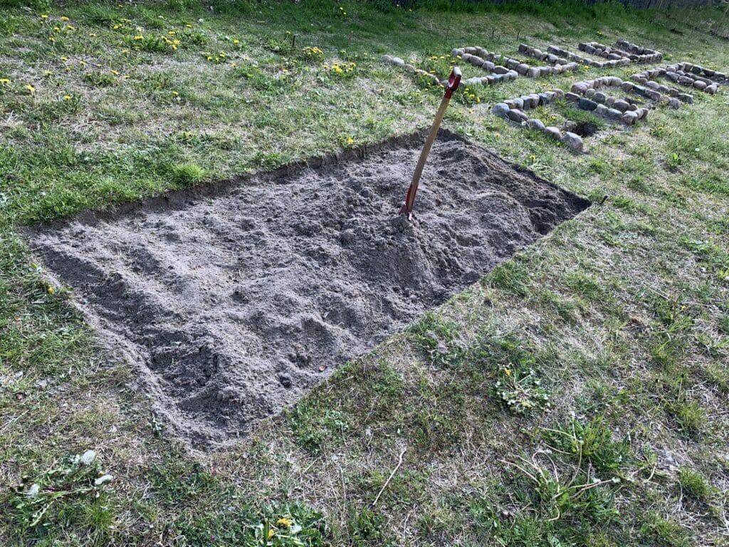 anlægning af aspargesbed