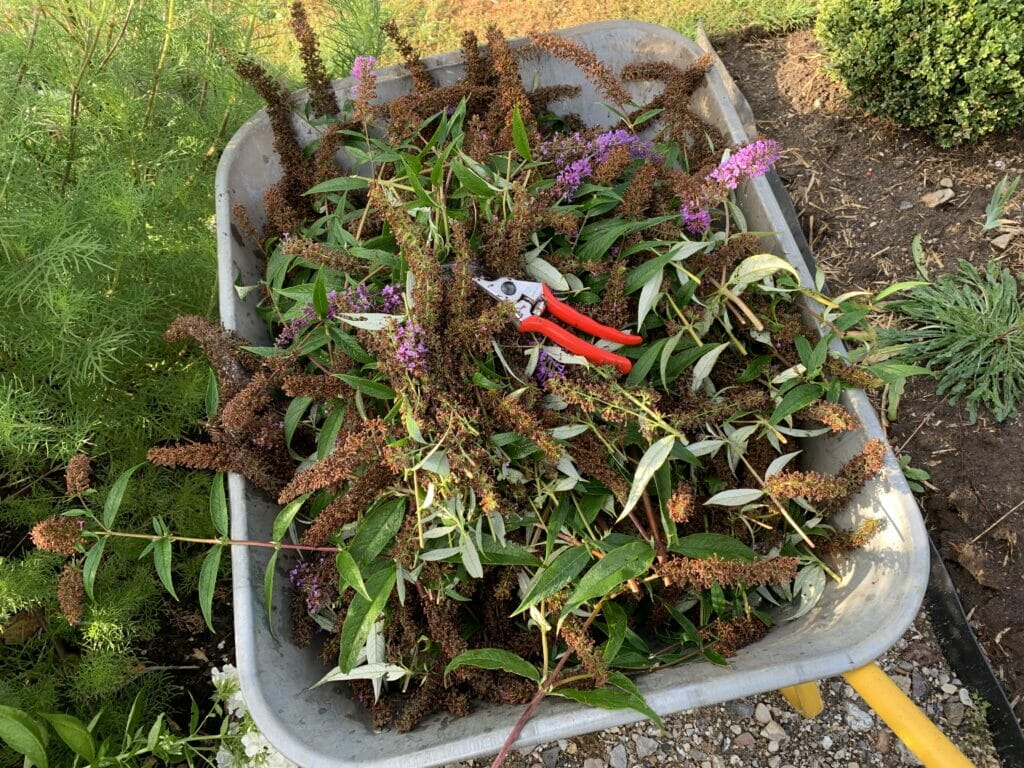 afklip kompost sommerfuglebuske