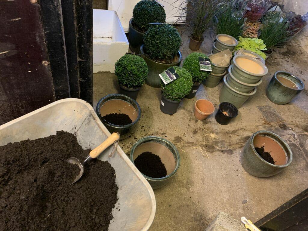 krukker krukkehave plantning