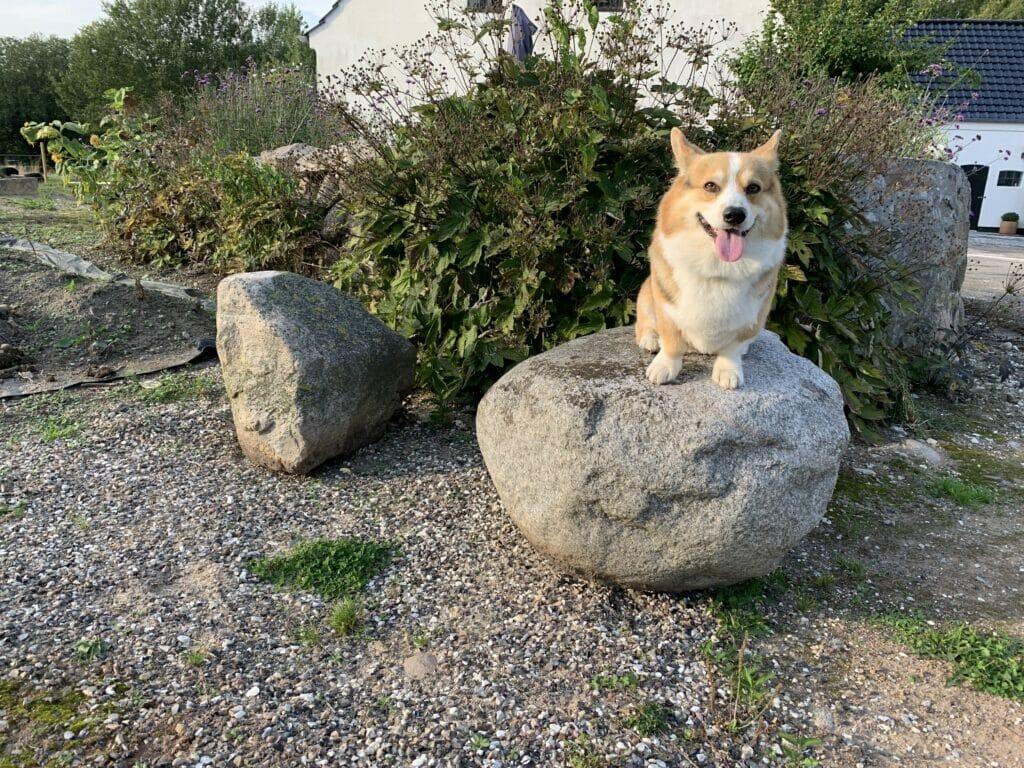 Stor store sten haven