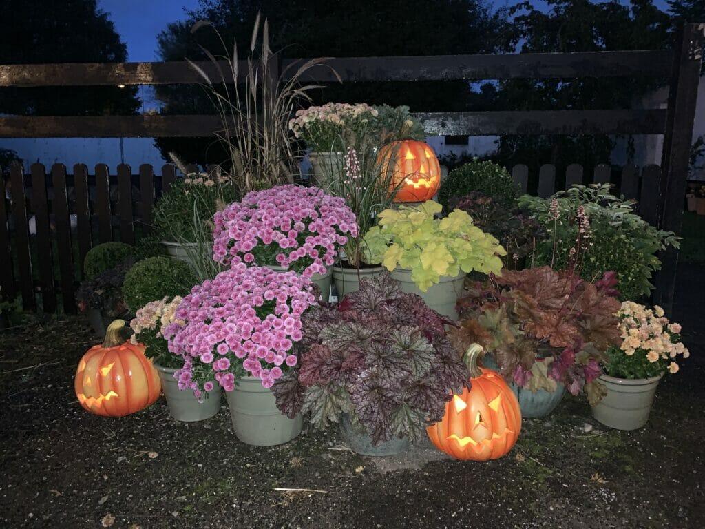 Halloween allehelgensaften græskar lys
