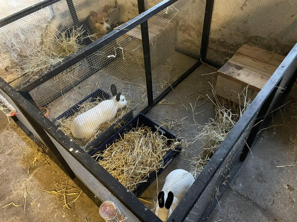 kaniner om vinteren kanin kaninbur løbegård